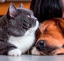Imagen de Asistencia de Mascotas
