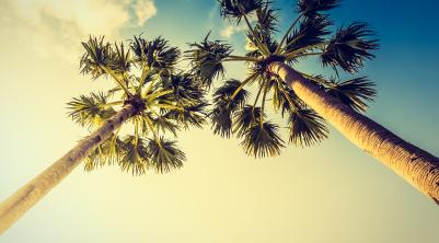 Descubre Miami con Viajes PRESENTE