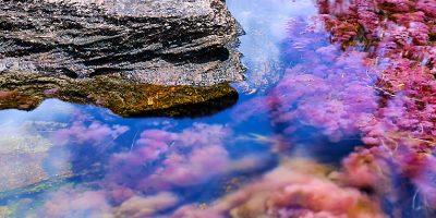 Visita Caño Cristales con Viajes PRESENTE